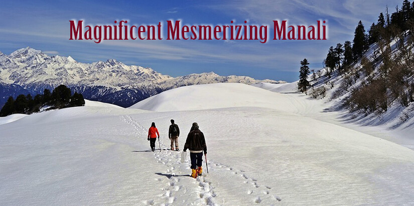 Honeymoon Vacation Package for Manali